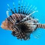 European property FISH